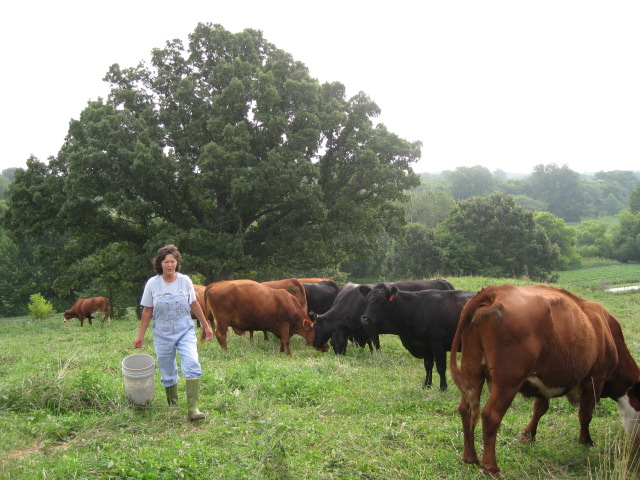 rhonda perry with cows