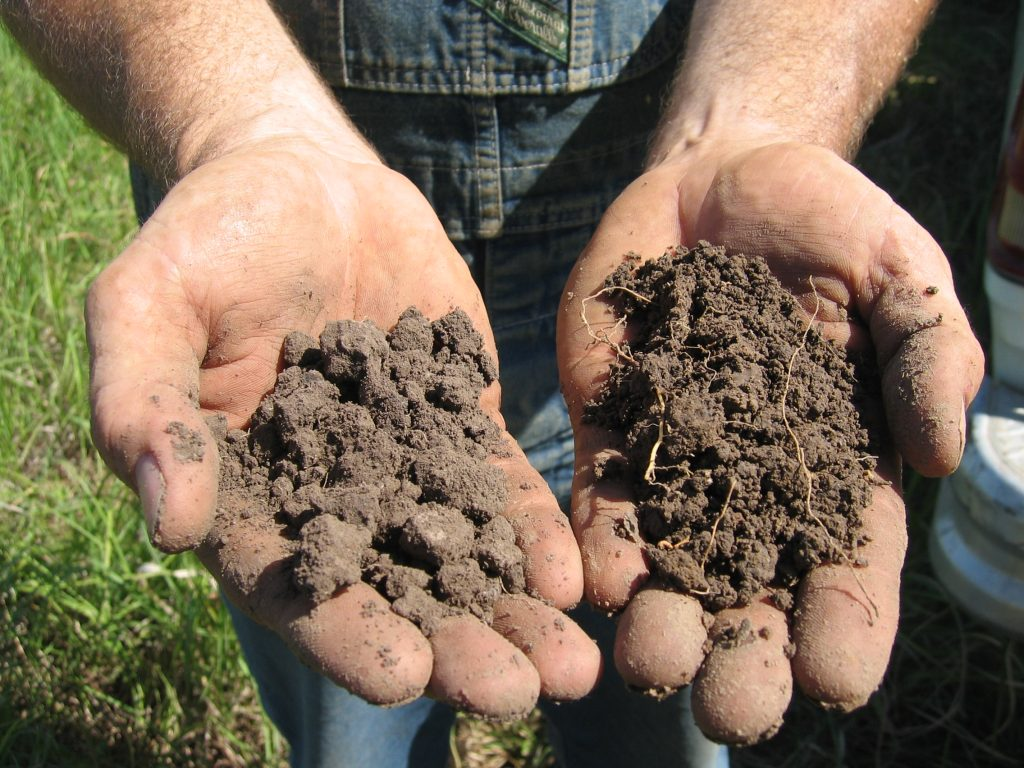 Soil comparison in hands